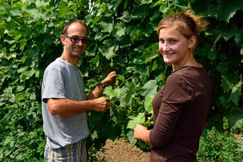 Bild von Laubarbeiten im Weingarten